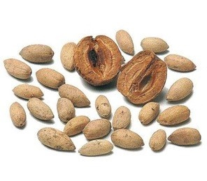 InkedHigh-quality-dried-raw-india-Neem-SEEDS_jpg_300x300_LI_1588400503.jpg