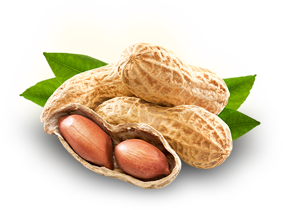 Peanut-PNG-Photo_1588393793.png