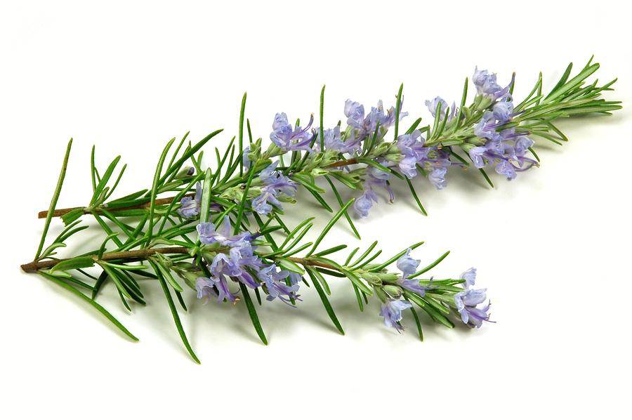 Rosemary-Olive-Oil-_1588422622.jpg